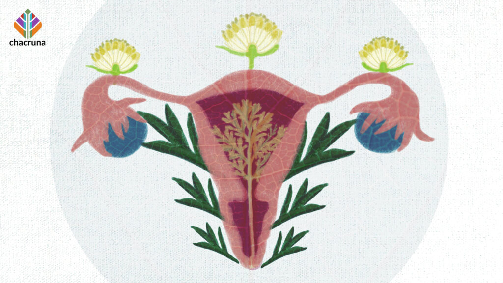 A uterus with plants growing amongst it representing medicinal abortion in Mexican history